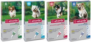 0003597_bayer-advantix-per-cani-4-10-kg